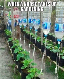 When a nurse takes up gardening