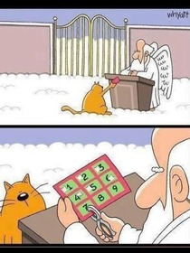 When all good cats go to Heaven