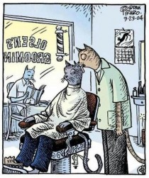 When cats go to the barber