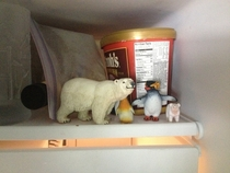 When I asked my little bro why there were Polar bears and penguins in the freezer he answered Because that is where they belong