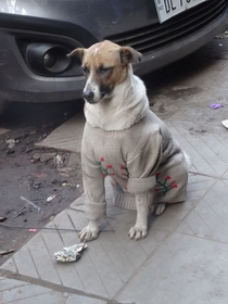 When I saw this dog in India and took his picture I did not realize his jacket was not fur necked