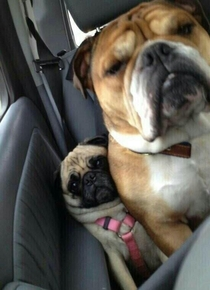 When Im the smallest person in a packed car