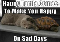 When kitty is sad send in happy turtle