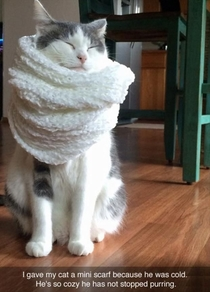 When my cat feel cold