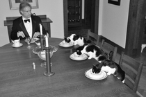 When my wife leaves town I get bored Six days into her vacation I joked Im going to have a formal dinner with the cats Then I thought about it for a while