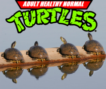 When the evil Shredder attacks these turtle males will jump into a body of water in an attempt to escape