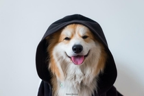When you are on the dark side but still a good boy