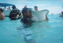 When you lose your stingray but then you find it again