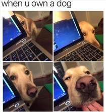 When you own a DOG