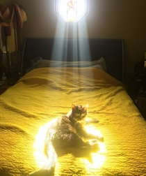 When your cat has a sidequest for you to do