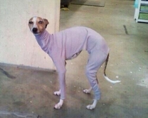 When your momgf buys you ugly clothes but you still have to try them on