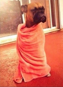 When youre sleeping on the couch and someone wakes you up and tells you to go to your bed