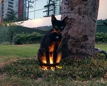 When youre walking in the park and an animal has a side quest for you