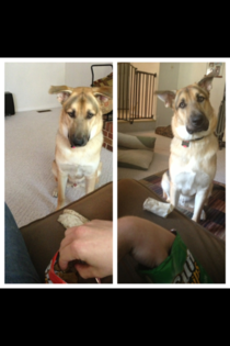 Whenever I eat sun chips somebody always wants to trade