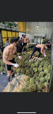 Where can I find these good looking durian asking for a friend