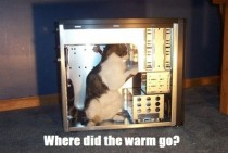 Where did the warm go