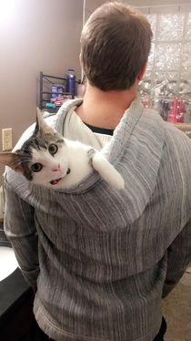 who needs a fancy cat backpack when you can just use your hoodie