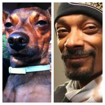 Why do Snoops Dogs look as high as he does I swear this is nd Dog Ive seen that looks like Snoop and as high as he does