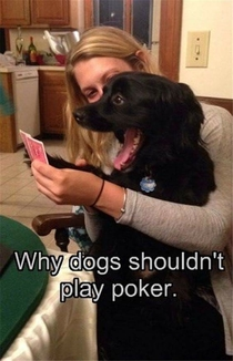 Why dogs shouldnt play poker