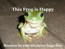 Why ridiculously photo-genetic frog is so happy