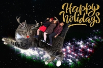 Wife wanted a holiday card with our kitten