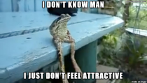 With all those photogenic frogs on reddit