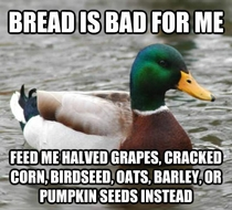 With spring upon us here is some advice for our beloved mallard