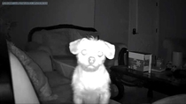 Woke up in the middle of the night to a notification that my security camera detected motion Cue instant heart attack