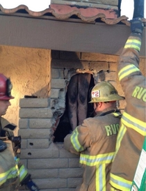 Woman tries getting into ex boyfriends house by sliding down chimney like Santa Claus didnt go as planned