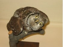 Yes bad taxidermy is funny I present this wonderfully retarded owl