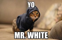 Yo Mr White