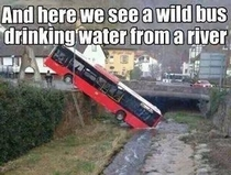 You can lead a bus to water
