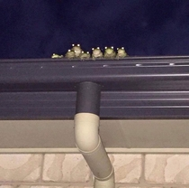 You never know when a frog family is watching you